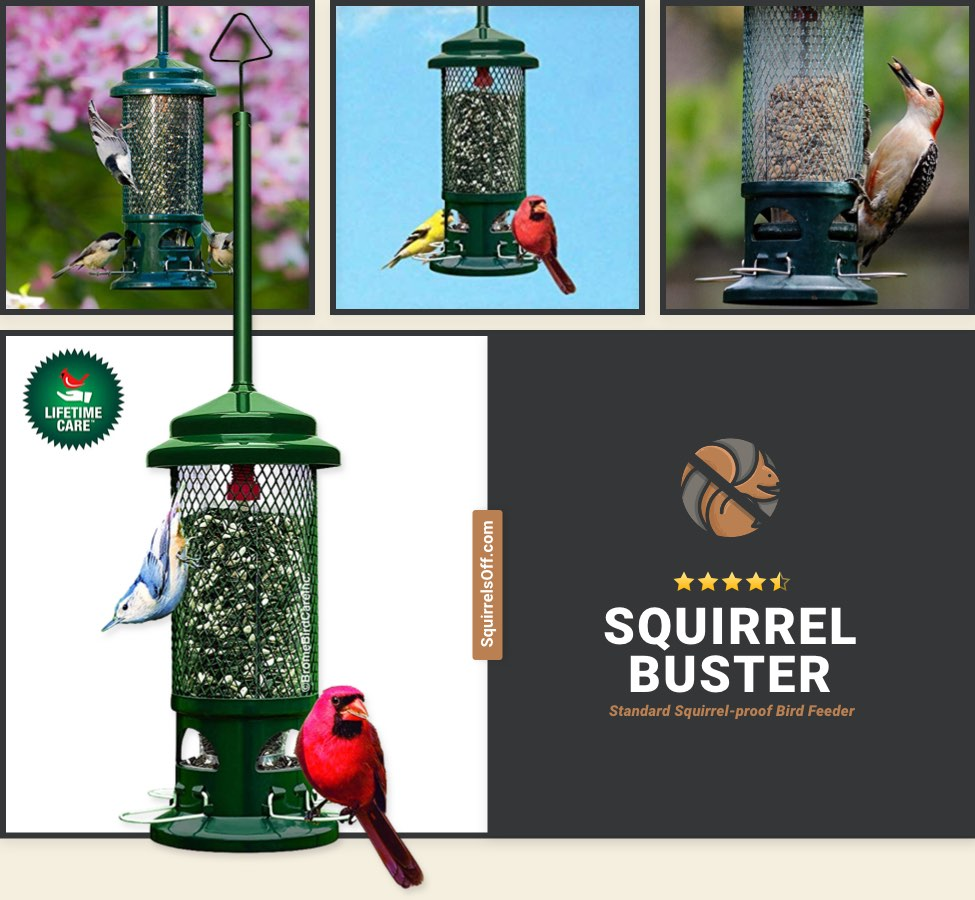 Overall Best Squirrel Proof Bird Feeder