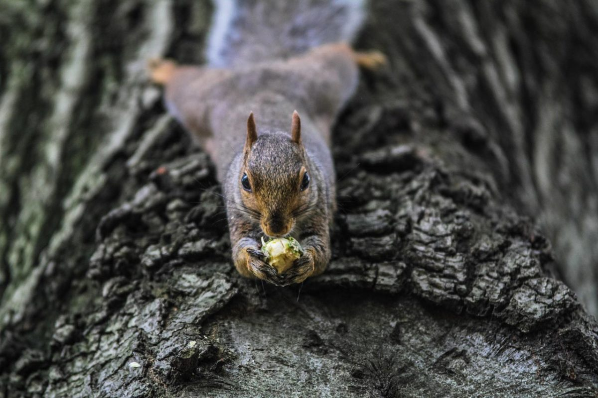 Squirrel that Feeds