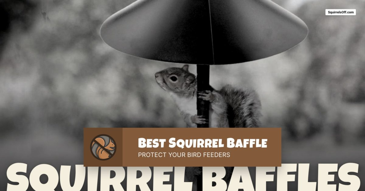 Best Squirrel Baffles