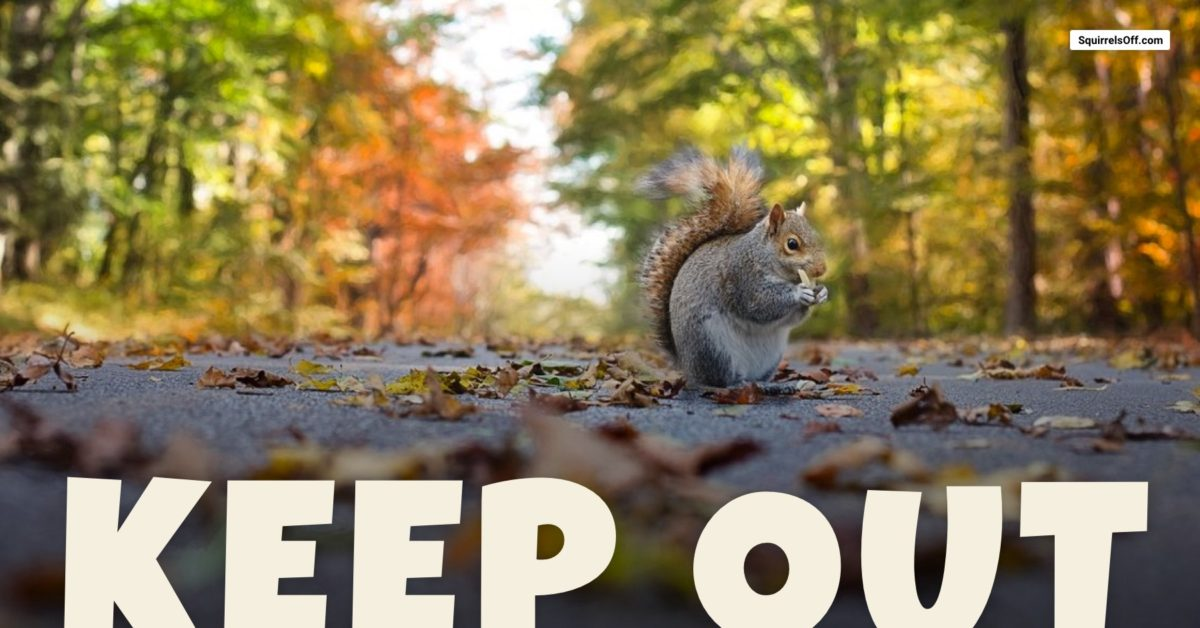 Keep Squirrels Out