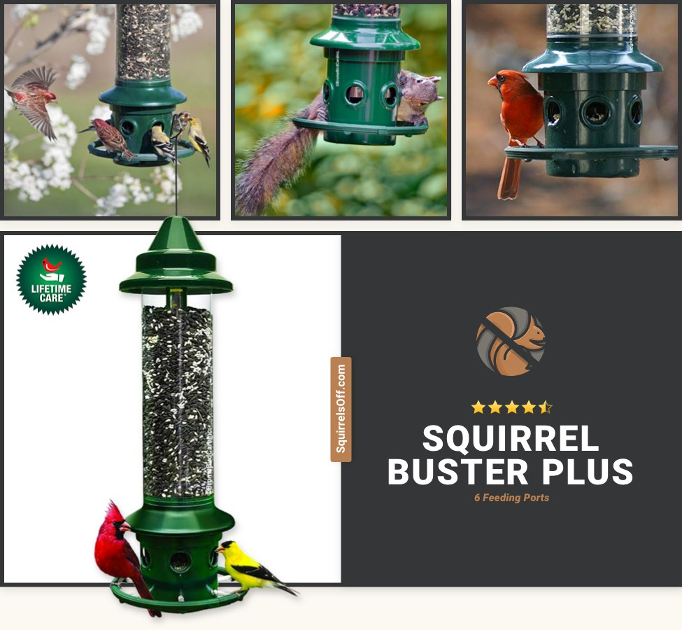 Best Durable Feeder