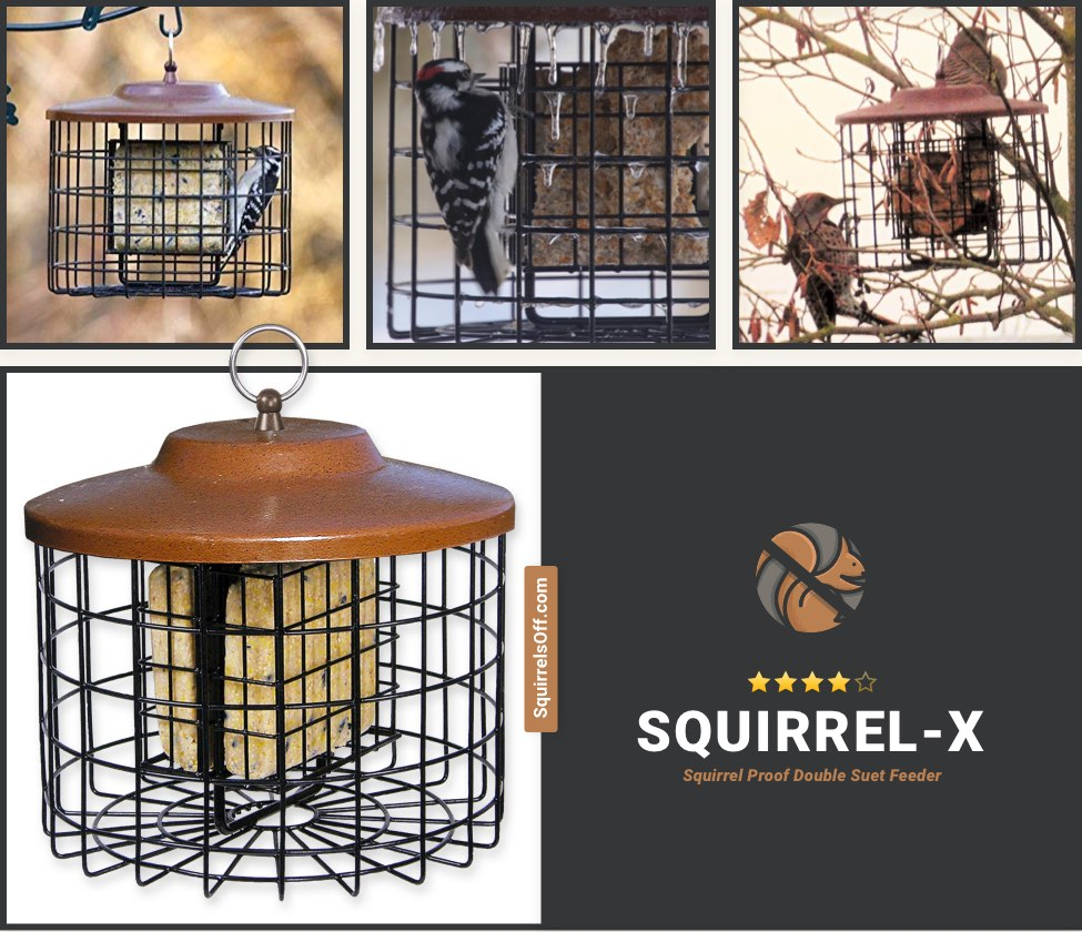 Best Suet Cage Feeder