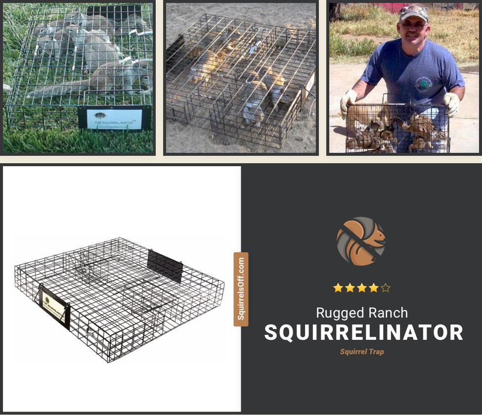 Squirrelinator Best Squirrel Trap