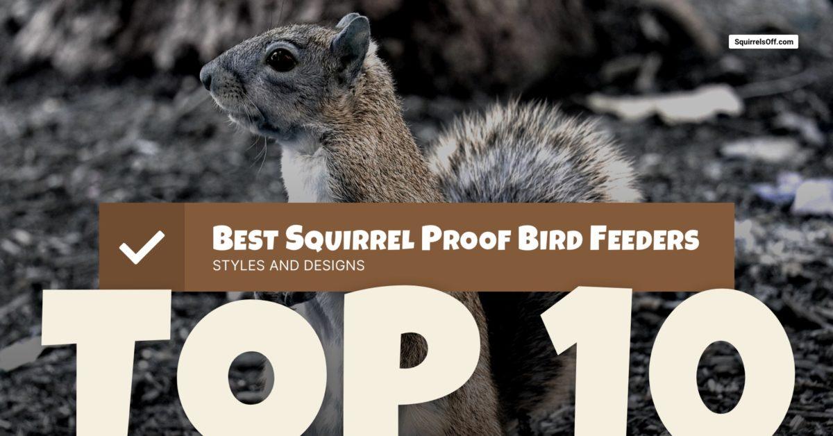Top 10 Squirrel Proof Bird Feeders