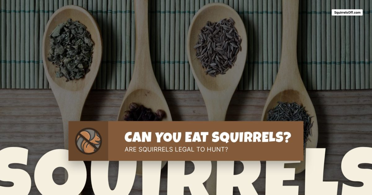 Can You Eat Squirrels