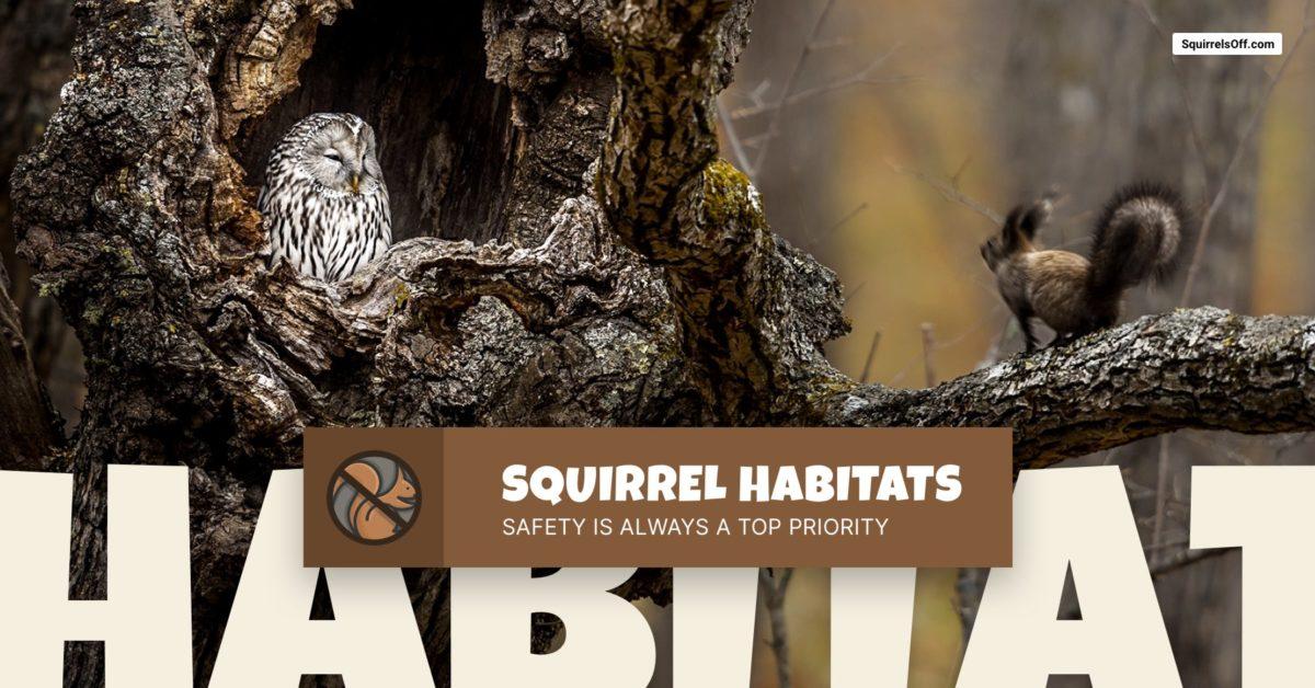 Squirrel Habitats